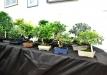 Augalų labirintai 2015