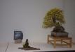 duseldorfo-muziejaus-prizas-bonsaieuropa2015-prizininkas-1-037