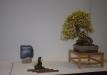 duseldorfo-muziejaus-prizas-bonsaieuropa2015-prizininkas-4037