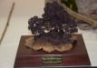 geriausia-kompozicija-bonsaieuropa2015-prizas