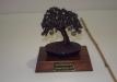 geriausias-lapus-metantis-bonsaieuropa2015-prizas