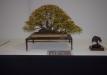 geriausias-lapus-metantis-bonsaieuropa2015-prizininkas-1-097