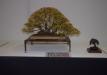geriausias-lapus-metantis-bonsaieuropa2015-prizininkas-2-097