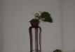 geriausias-shohin-bonsaieuropa2015-prizininkas-3-042