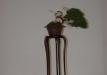 geriausias-shohin-bonsaieuropa2015-prizininkas-4-042