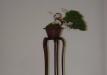 geriausias-shohin-bonsaieuropa2015-prizininkas-5-042