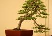 04-juniperus-2-after