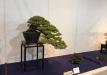 kokufu-ten-912017-2-dalis-005