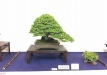 kokufu-ten-912017-2-dalis-022