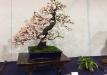 kokufu-ten-912017-2-dalis-023