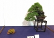 kokufu-ten-912017-2-dalis-024