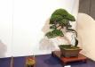 kokufu-ten-912017-2-dalis-025