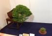 kokufu-ten-912017-2-dalis-026