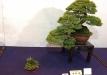 kokufu-ten-912017-2-dalis-035