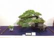 kokufu-ten-912017-2-dalis-036