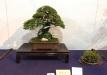 kokufu-ten-912017-2-dalis-041
