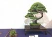 kokufu-ten-912017-2-dalis-044