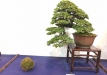 kokufu-ten-912017-2-dalis-048