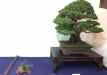 kokufu-ten-912017-2-dalis-052