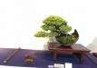 kokufu-ten-912017-2-dalis-054