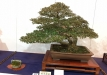 kokufu-ten-912017-2-dalis-058