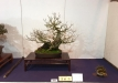 kokufu-ten-912017-2-dalis-059