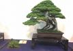 kokufu-ten-912017-2-dalis-065