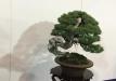 kokufu-bonsai-ten-91-003