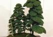kokufu-bonsai-ten-91-004