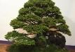 kokufu-bonsai-ten-91-006