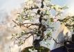 kokufu-bonsai-ten-91-007