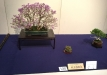 kokufu-bonsai-ten-91-008