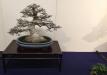 kokufu-bonsai-ten-91-009