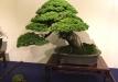 kokufu-bonsai-ten-91-010