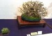 kokufu-bonsai-ten-91-011