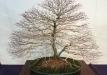 kokufu-bonsai-ten-91-012