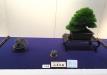 kokufu-bonsai-ten-91-013