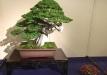 kokufu-bonsai-ten-91-014