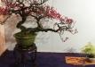 kokufu-bonsai-ten-91-016