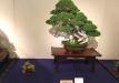 kokufu-bonsai-ten-91-017