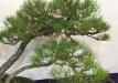kokufu-bonsai-ten-91-018