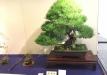 kokufu-bonsai-ten-91-019
