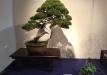 kokufu-bonsai-ten-91-023