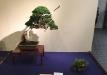 kokufu-bonsai-ten-91-024