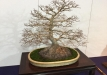 kokufu-bonsai-ten-91-026