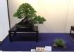 kokufu-bonsai-ten-91-027