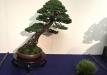 kokufu-bonsai-ten-91-028