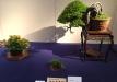 kokufu-bonsai-ten-91-029