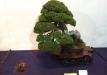 kokufu-bonsai-ten-91-030