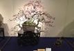 kokufu-bonsai-ten-91-031
